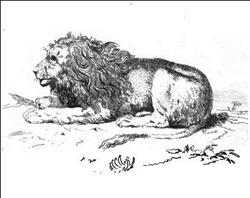 agiftfromfairyl00paulgoog_0120 lion