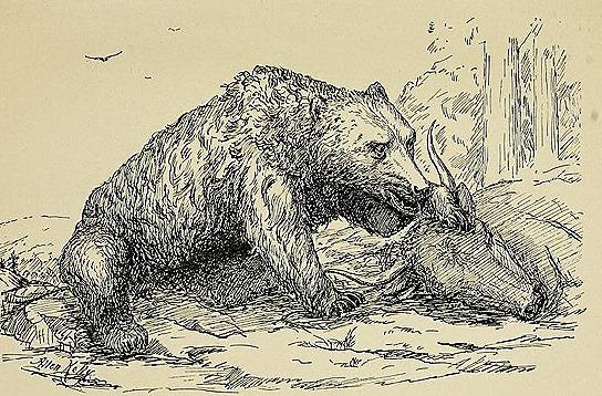 bearsihavemetand00kell_0043