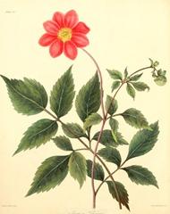 floralillustrati00rosc_0136