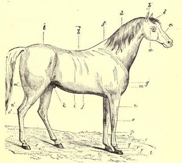 horseitsvarietie00armarich_0025