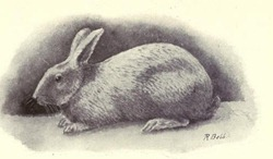 rabbitscatscavie00lanerich_0159